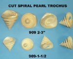 Wholesale Pearlized Spiral Cut Trochus Top Shells 2 to 2-7/8 inches - Packed: 8 pieces @ .90 each;