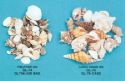 wholesale assorted seashells in bulk for crafts by kilo gallon