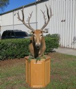 Pere David's Deer Pedestal Mount, one pere david head mounted on an oak wood octagon pedestal - $1,800 (Pick Up Only - Too Large to Be Shipped)