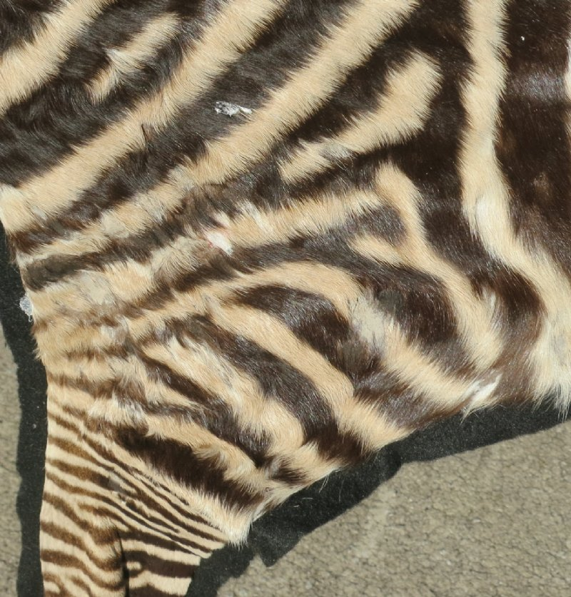 """49"""" X 20"""" Real Zebra Skin With Hooves Rug With Felt Backing"""