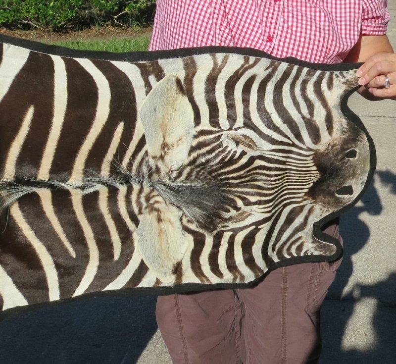 "84"" X 54"" B-Grade Real Zebra Skin Rug With Felt Backing"