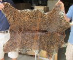 Animal Print Rugs at Rugs USA - Animal skin rugs available in many