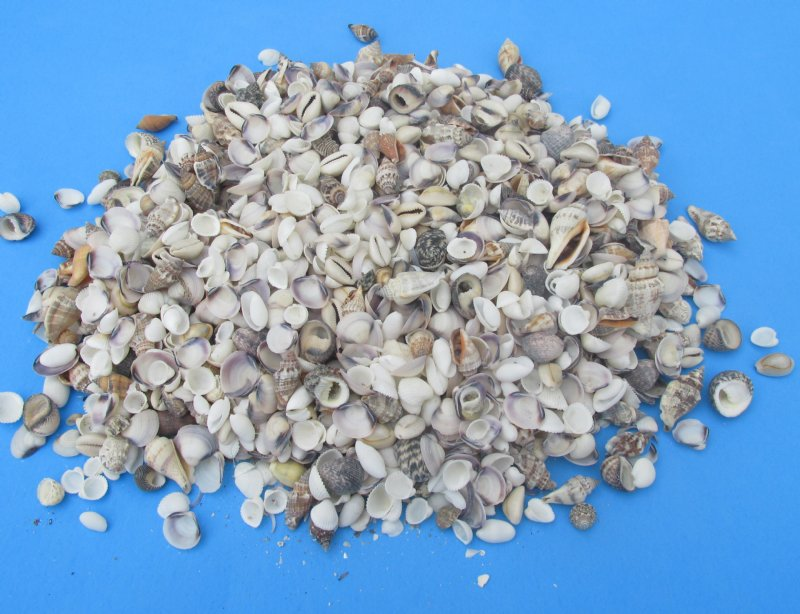 Wholesale small mixed seashells for crafts and making for Tiny shells for crafts