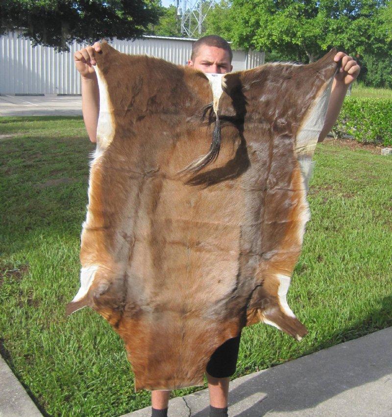 African blesbok skin rug blesbok hide for cabin decor 48 for African skin decoration