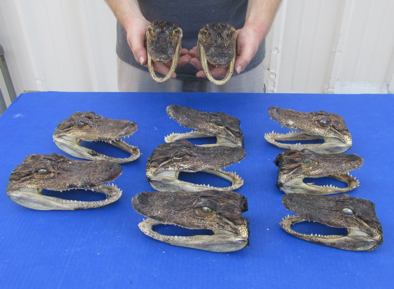 Alligator Meat | Buy Online from Fossil Farms