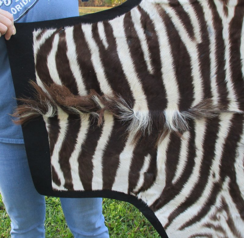 65 X 54 Real Zebra Skin Rug With Felt Backing
