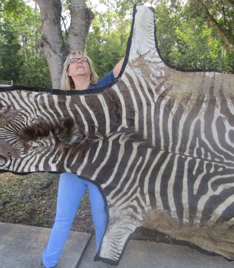 3 Grade 103 X 75 Real Zebra Skin Rug With Felt Backing