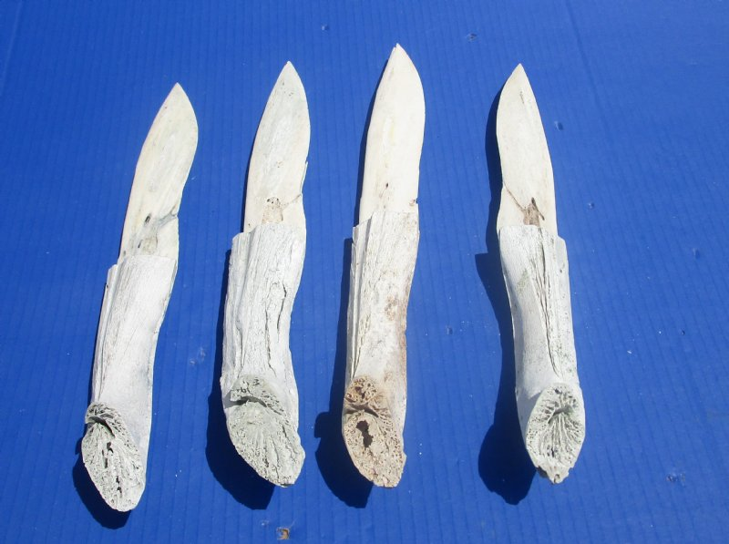 12 To 13 1 2 Inches Wholesale Alligator Bone Knives