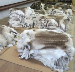 Whole Animal Skin Rugs Real