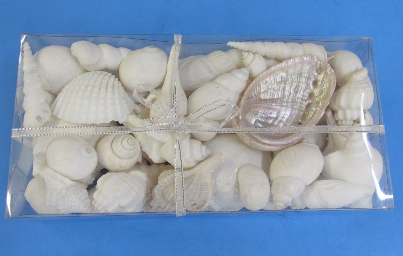 8 X 4 X 15 White Pearl Shells Filled Clear Box With Decorative