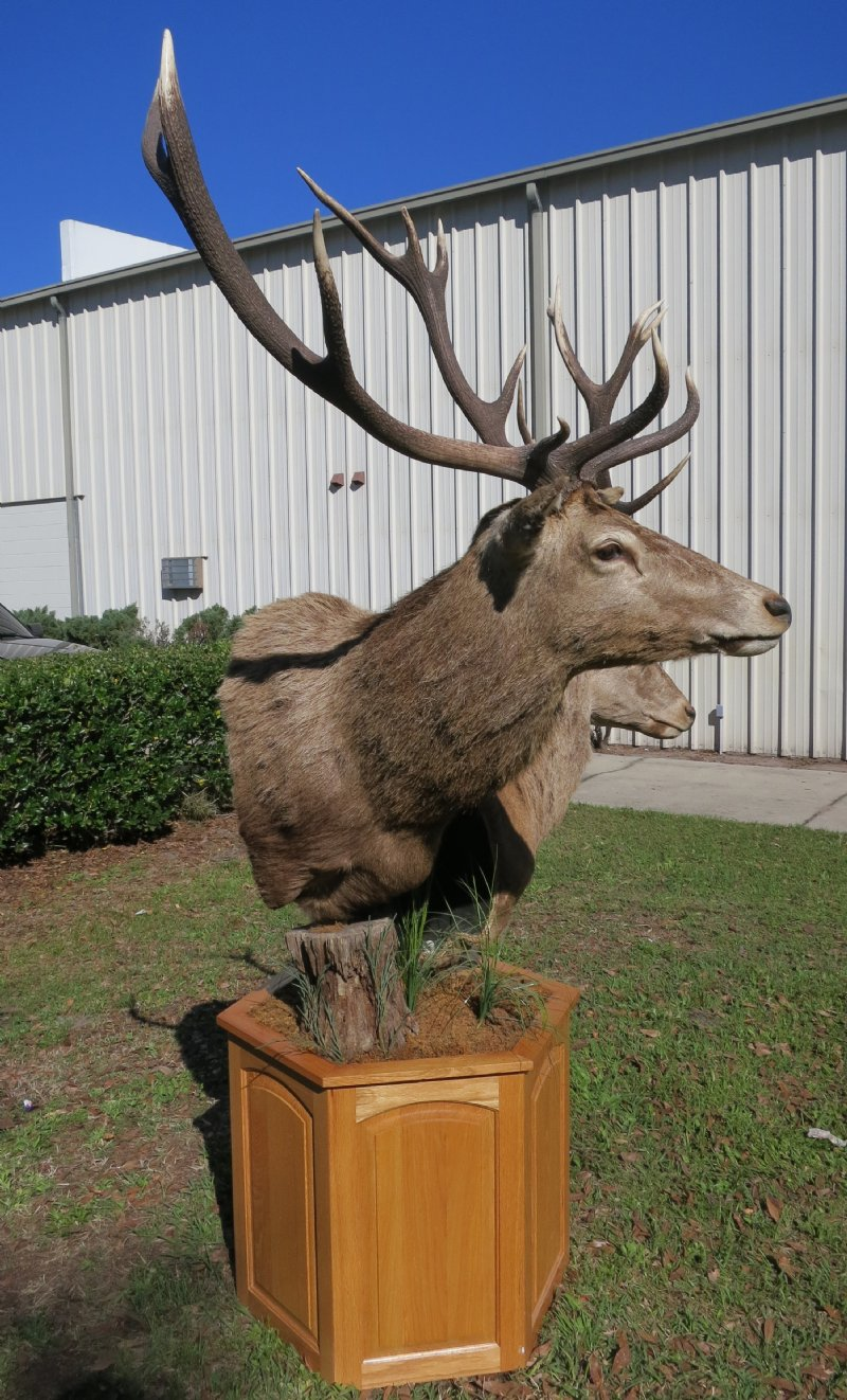 pedestal prices med of mount natural instincts enlarge pedestals gallery indian taxidermy with buck mounts